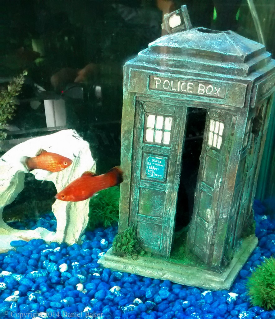 photograph of two red platys in fishtank containing model Tardis