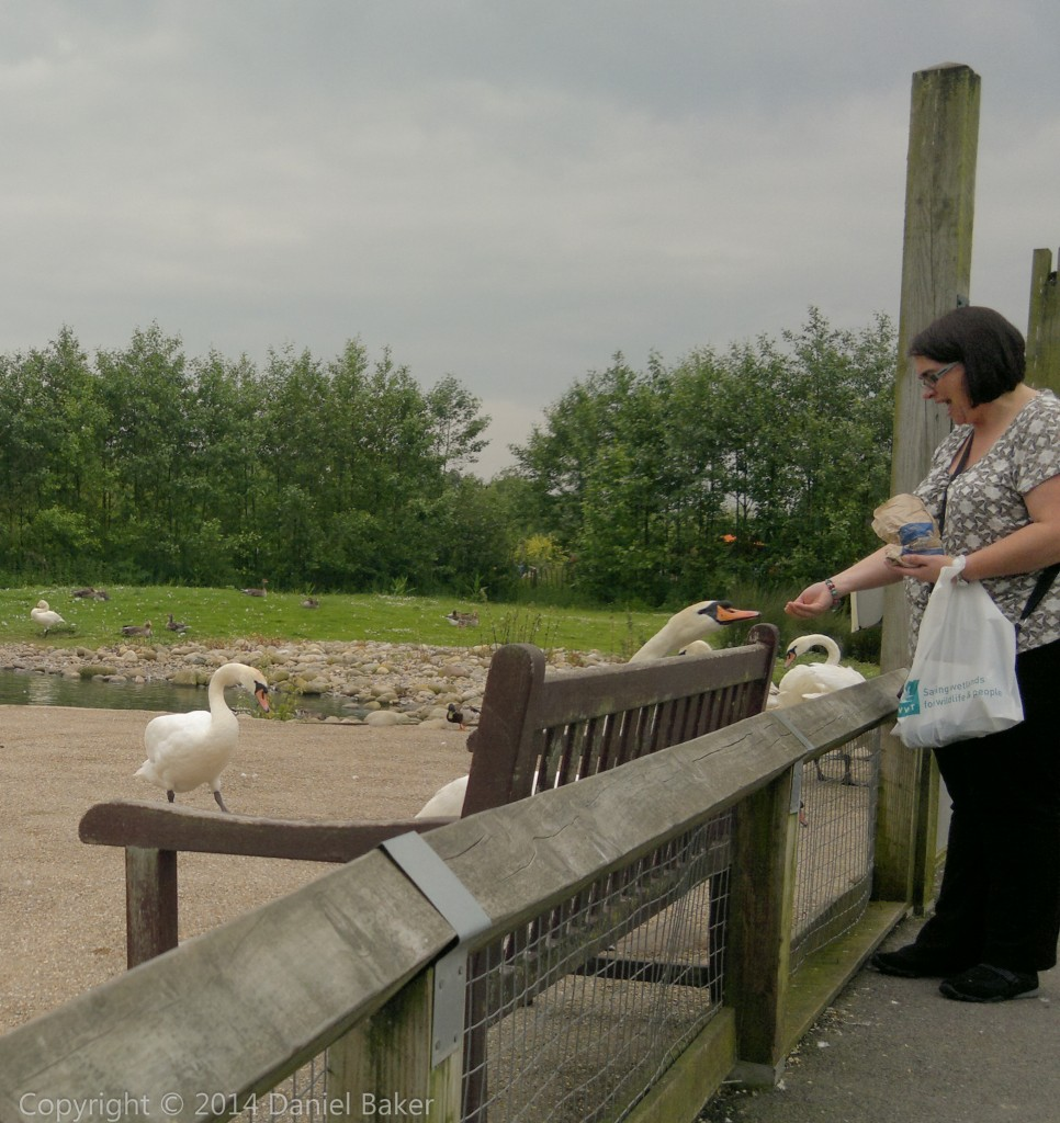 Kylie at WWT Slimbridge feeding a swan