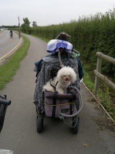Dexter getting a lift on the back of my wheelchair