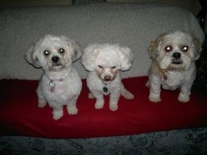 A posing trio