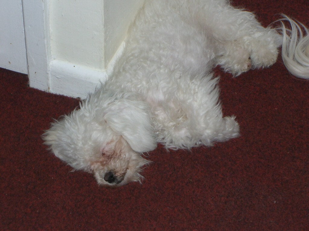 One of Dexter's favourite places to sleep, outside the bathroom door