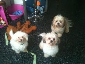 Dexter, Kara and Mya
