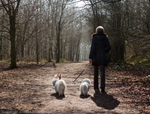 Dexter walking with my Aunt up Crickley hill