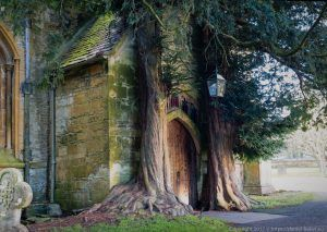 A door in a church wall with a tree either side which look like an archway growling out of the stone itself