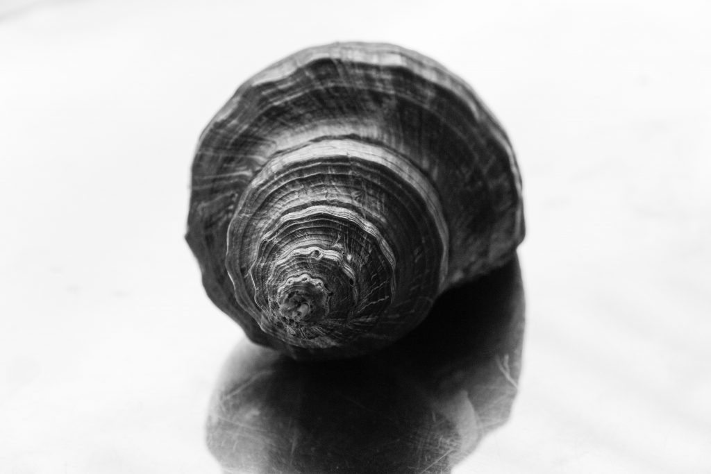 Black and White photo of a shell