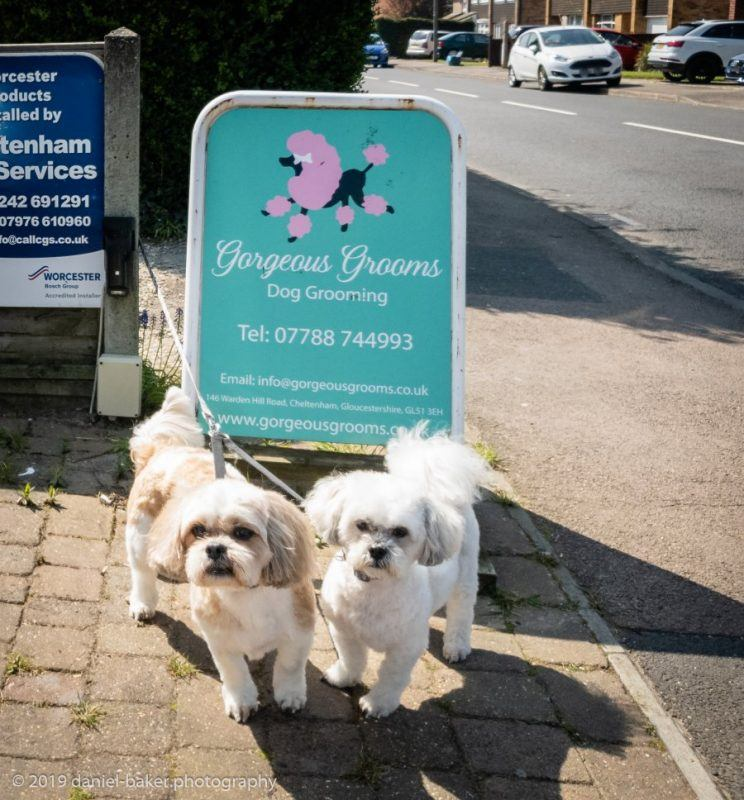 Easter Weekend - Mya and Kara, two freshly groomed small dogs in front of a dog groomer sign