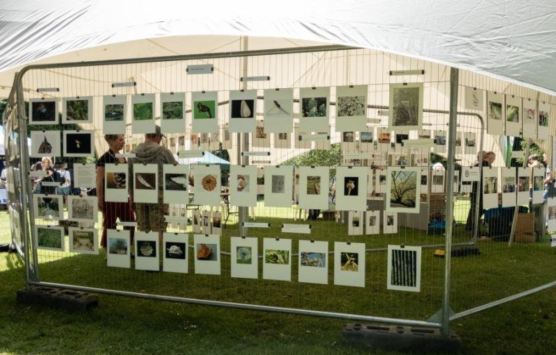An exhibition of photographs in Stratford park, all A4 clipped to metal fencing