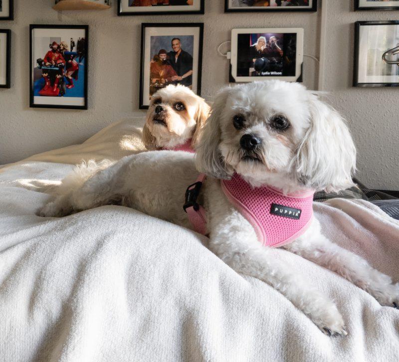 Kara and Mya laying on Daniel's bed
