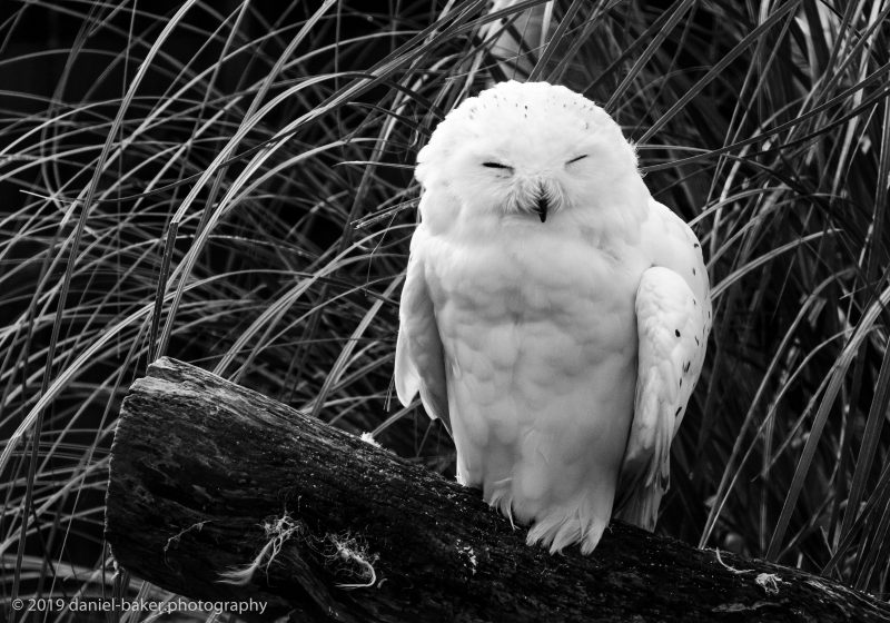 Owl Birdland October 2019