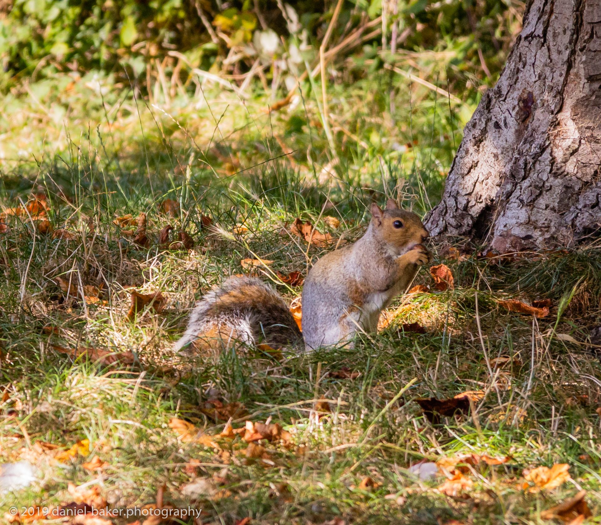 Squirrel eating a nut at Hesters way park