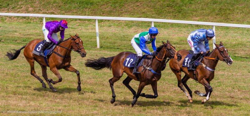 Racehorses at Worcester racecourse