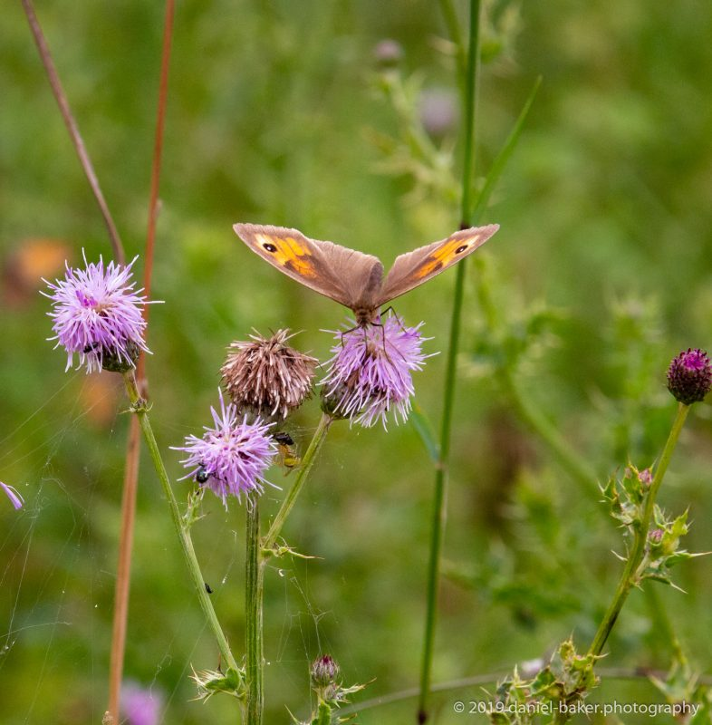 Butterflies at Croome