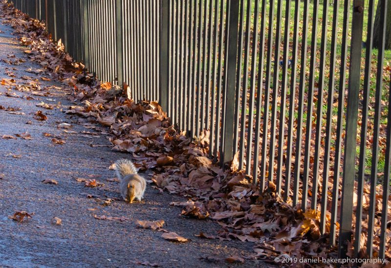 Squirrels in Hyde Park, London