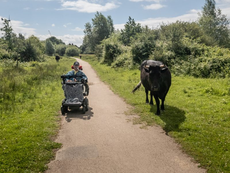 Daniel Baker on a path with a black cow near him