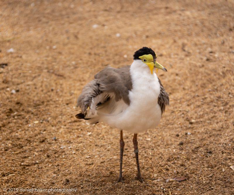 bird at Birdland