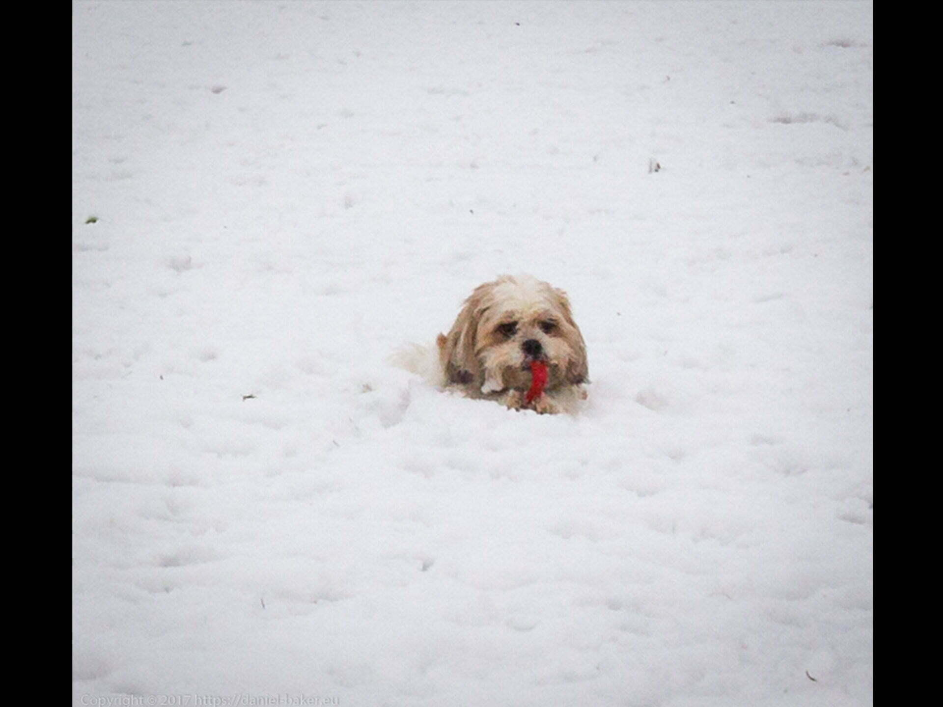 A dogs head visible in the snow